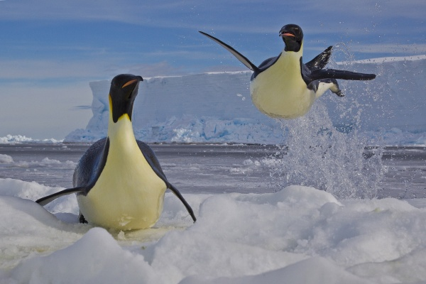 Frozen moment, Paul Nicklen (Canada), Winnaar