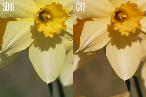 Panasonic GH2 vs Canon 5D Mark II