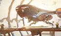 CES: 3DMark Port Royal-benchmark met raytracing is nu beschikbaar