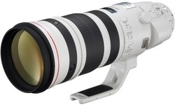 Canon EF 200-400mm f/4 L IS USM Extender 1.4x